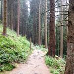 Winterweg: idyllischer Wanderweg bei Winterberg