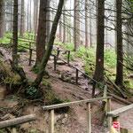 Winterberg: Aufstieg zum Kahlen Asten