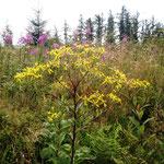 Rothaarsteig: Flora am Wegesrand