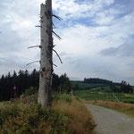 Rothaarsteig: groteskes Holz am Wegesrand des Grenzweges