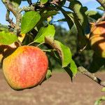 2013-09-26 Rothenhausen - Apfel -Jahreszusammenfassung 2013 Bild 98 (PS CS6)