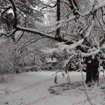 2008-12-07 Rengoldshausen - Schnee © Pekasus1988