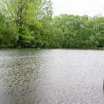 2013-05-22 Rothenhausen - Hochwasser -Jahreszusammenfassung 2013 Bild 40 (PS CS6)
