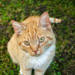2013-06-18 Lübeck - Katze mit Hundeblick -Jahreszusammenfassung 2013 Bild 70 (PS CS6)