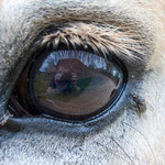 2013-05-11 Rothenhausen - Ronny's Auge -Jahreszusammenfassung 2013 Bild 33 (PS CS6)