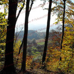 2008-10-19 Heiligenberg - Herbst © Pekasus1988