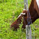 2012-07-21 Rothenhausen - gewusst wie PS 5 © Pekasus1988
