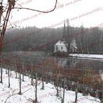 2008-11-25 Gut Rheinau - Reeben © Pekasus1988