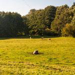 2013-10-03 Rothenhausen - Große Jungtiere -Jahreszusammenfassung 2013 Bild 105 (PS CS6)