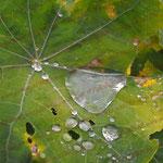 2008-10-28 Rengoldshausen - Wassertropfen © Pekasus1988