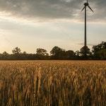 2013-06-09 Rothenhausen - Getreidefeld -Jahreszusammenfassung 2013 Bild 53 (PS CS6)
