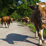 2012-07-23 Rothenhausen - vorWEG gehen PS 5 © Pekasus1988