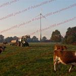 2011-10-02 Rothenhausen -Morgenstimmung- © Pekasus1988