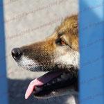 2010-08-29 Spanien - Alicante  - Wachhund © Pekasus1988