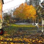 2009-10-31 Rothenhausen - Frost © Pekasus1988