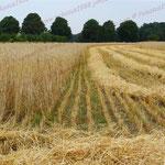 2010-07-27 Rothenhausen - Getreideernte © Pekasus1988