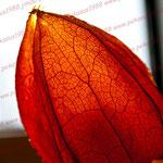 2011-10-08 Bliestorf -Licht- © Pekasus1988