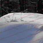 2008-12-15 Mont Saint Odile - Spuren © Pekasus1988