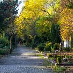 2013-10-18 Berlin - Friedhof Schmargendorf Jahreszusammenfassung 2013 Bild 112 (PS CS6)