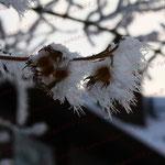 2010-12-18 Rothenhausen - Frost © Pekasus1988
