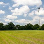 2013-06-10 Rothenhausen - Nachsäen -Jahreszusammenfassung 2013 Bild 60 (PS CS6)