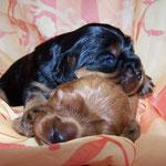 Chico und Camillo