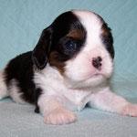 Gustaf 3,5 Wochen