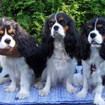 Gustaf mit Mama Babette und Bruder George