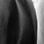 "Por su forma (For his shape) Alejandra Iturrizaga Andrich 31 ¾"" x 47 ¼"" Limited Edition Photograph 1 of 2 $800"