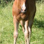 Bambi (Padre Tucks Girl x Jaz Poco Charro)