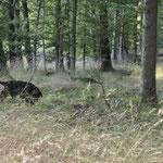 Anouk im Unterholz