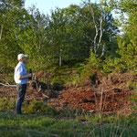 Der Baumfalke war uns sicher, der Ziegenmelker wurde unter Verdacht beobachtet. Zu kurz war der Moment des Auffliegens. Wie ein Moorgeist verschwand der Vogel zwischen den Birken.