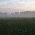 Eine Beweidung durch Schafe ist eine schonende Art der Pflege im Herbst. Die Heuernte soll nicht vor Ende Juni stattfinden.