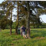 Der Brutbaum ist erreicht und die Kontrolle kann beginnen.