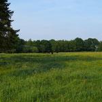 Deutlich ist zu erkennen ist der überschaubare Bewuchs der Fläche. In massiv gedüngten Wiesen stehen die Gräser zu dieser Zeit doppelt so hoch.