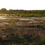 Torf gehört ins Moor und sollte hier auch verbleiben.