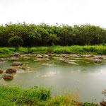 Der Schildkrötentümpel im Garten der überteuerten Ranch