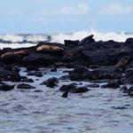 La Lobería, der Strand der Seelöwen