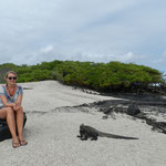 Wenn Tiere auf Galapagos eines nicht sind, dann ist es scheu.