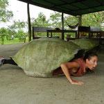 ... die geborenen Schildkröten? :-)