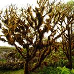 Unheimliche Landschaft im Hochland von Santa Cruz