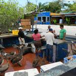 """Auf dem Fischmarkt warten auch andere """"Kunden"""", dass sie bedient werden"""