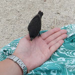 Nicht einmal die Vögel haben Angst vor den Menschen und fressen mit ein bisschen Geduld aus der Hand