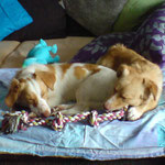 Doggy und Lissy