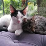 Tiger & Sophie