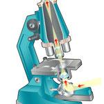 Bayard / Copain des sciences / Microscope