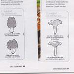 GEO Terroirs / Reconnaître les champignons