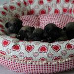 Bertus, Bodo, Burgi, Barney, Bärbel alle in einem Donat
