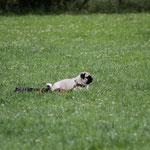 Ablage. die kleine charlotte sieht man kaum im hohen Gras