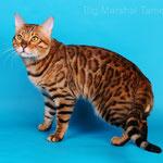 Big Marshal Tamerlan